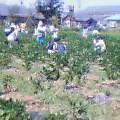 オーナー、夏の収穫祭