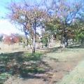 公園でお昼。でも・・