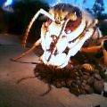 期待外れの巨大昆虫ふしぎワールド