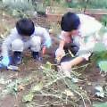 我が家の庭の収穫祭
