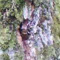 三条大崎山で昆虫採集2