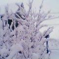 1月24日  雪