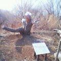 角田山灯台コースの梨木バッサリ