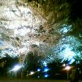 夜桜満開 その2