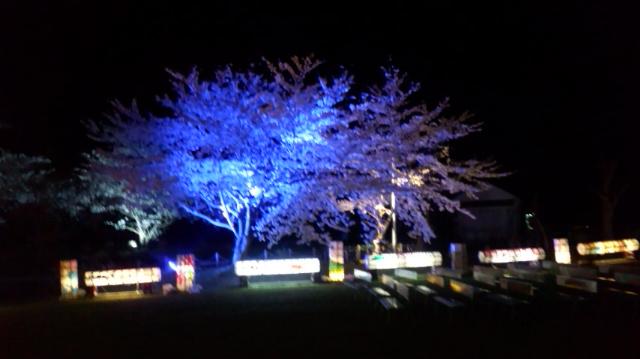 真野公園の夜桜