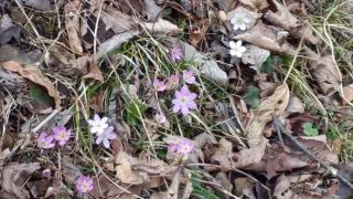 春の花々が咲き始めました